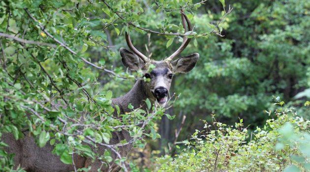 happy deer_resized